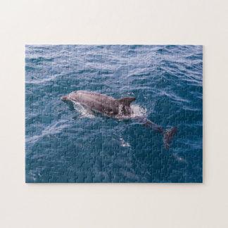 Rompecabezas del delfín de Bottlenose