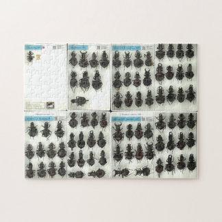 Rompecabezas del escarabajo