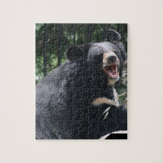 Rompecabezas del oso el gruñir