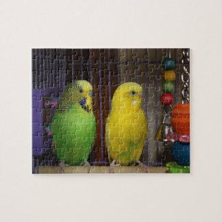 Rompecabezas del pájaro del Parakeet