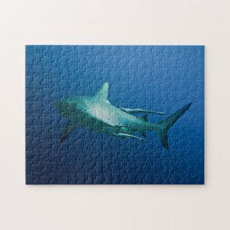 Rompecabezas gris del tiburón del filón