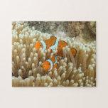 Rompecabezas lindo de Clownfish