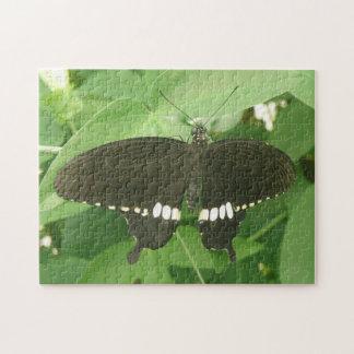 Rompecabezas mormón común de la mariposa