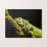 Rompecabezas noble de la iguana