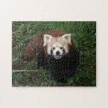 rompecabezas - panda roja