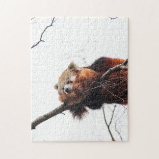 Rompecabezas rompecabezas de la panda roja