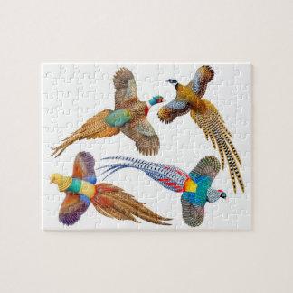 Rompecabezas salvaje colorido de los faisanes