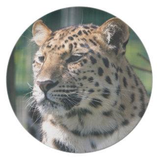 Ronroneo africano lindo del safari salvaje del gat plato de cena