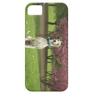 Roo Cherryblossom iPhone 5 Covers