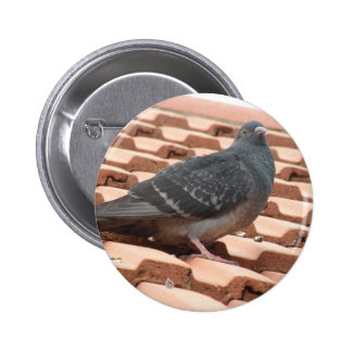 Rooftop Pigeon Button