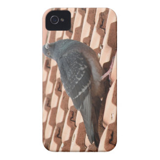 Rooftop Pigeon iPhone 4 Case