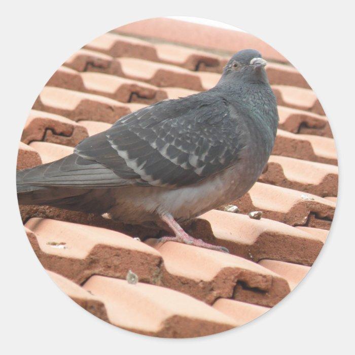 Rooftop Pigeon Sticker