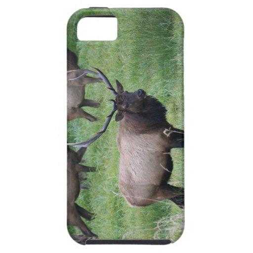 Roosevelt Bull Elk and Herd iPhone 5 Cases