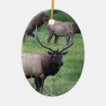 Roosevelt Bull Elk and Herd Double-Sided Oval Ceramic Christmas Ornament