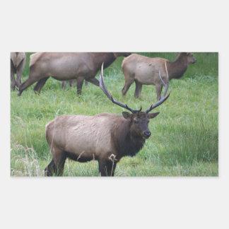 Roosevelt Bull Elk and Herd Rectangular Sticker