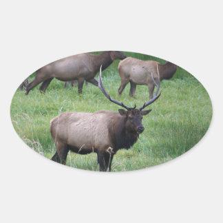 Roosevelt Bull Elk and Herd Oval Sticker