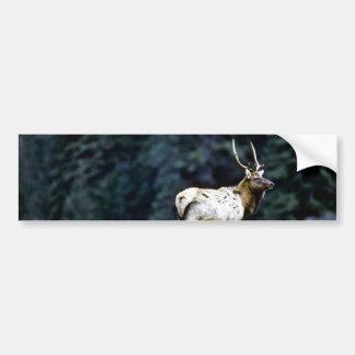 Roosevelt Bull Elk, Prairie Creek Car Bumper Sticker