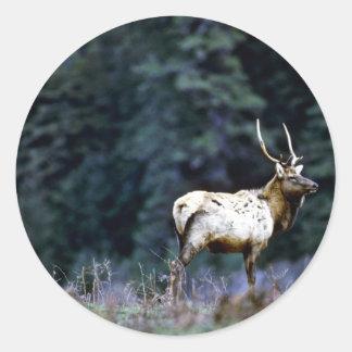 Roosevelt Bull Elk, Prairie Creek Classic Round Sticker