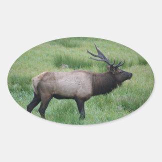 Roosevelt Bull Elk Oval Sticker