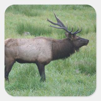 Roosevelt Bull Elk Square Sticker