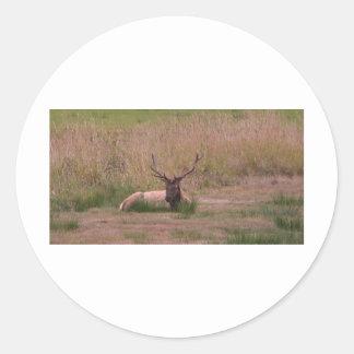 Roosevelt Bull Elk Classic Round Sticker