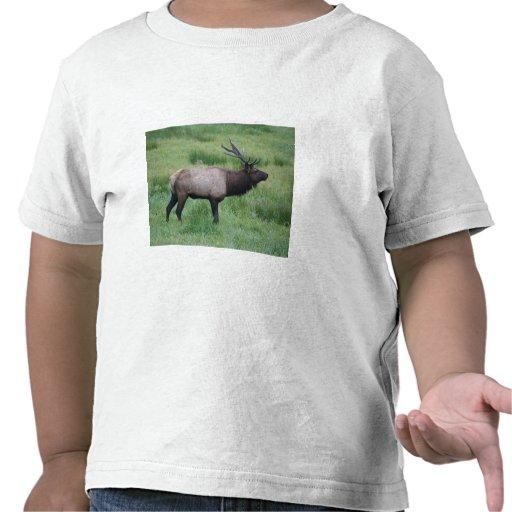 Roosevelt Bull Elk Tees