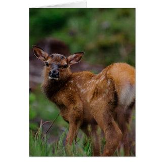 Roosevelt Elk Calf 1 Card