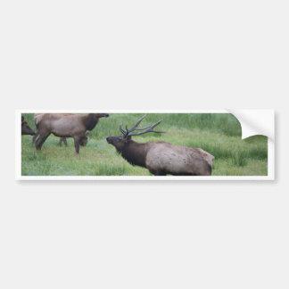 Roosevelt Elk in Oregon Car Bumper Sticker