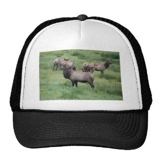 Roosevelt Elk in Oregon Trucker Hat