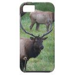 Roosevelt Elk in Oregon iPhone 5 Cases