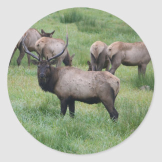 Roosevelt Elk in Oregon Round Sticker