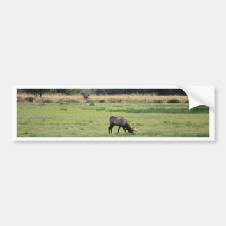 Roosevelt Elk, Oregon Car Bumper Sticker