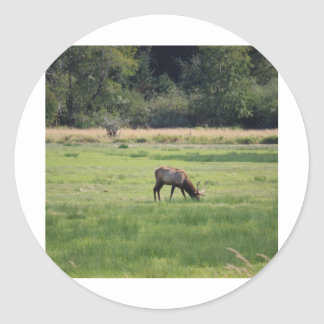 Roosevelt Elk, Oregon Classic Round Sticker
