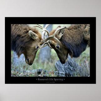 Roosevelt Elk Sparring Posters