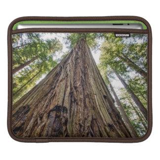 Roosevelt Grove Sleeve For iPads