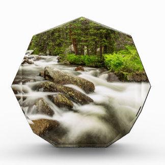 Roosevelt National Forest Stream Award