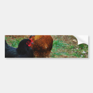 Rooster and Black Hen Car Bumper Sticker
