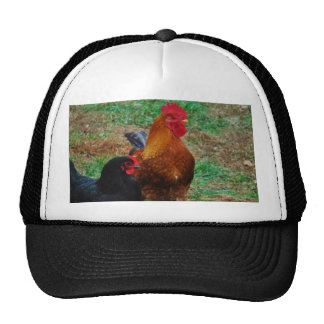 Rooster and Black Hen Trucker Hat