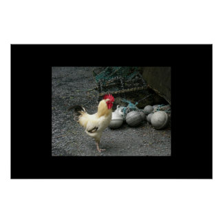 Rooster and cannon balls poster