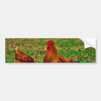 Rooster  and his chick car bumper sticker