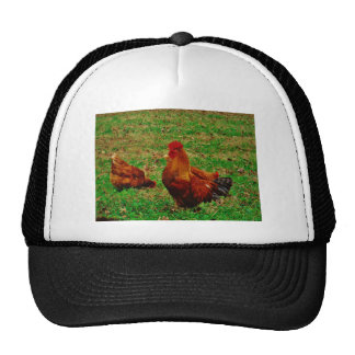 Rooster  and his chick trucker hat