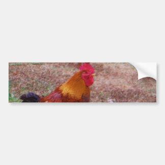 Rooster and his hens bumper sticker