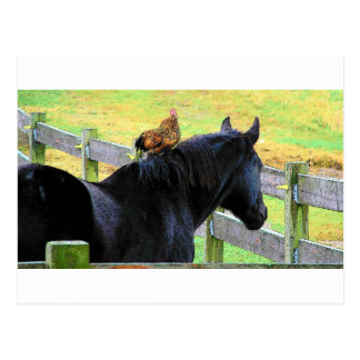 Rooster And Mare Postcard