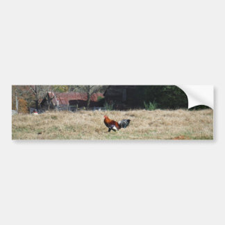 Rooster at the Farm Photo by Sandy Closs. Car Bumper Sticker