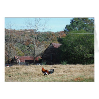 Rooster at the Farm Photo by Sandy Closs. Card