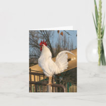 Rooster Blank Card