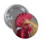 Rooster Chicken Button