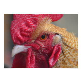 Rooster Chicken Card