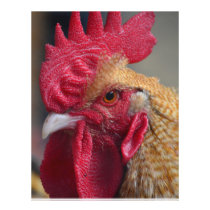 Rooster Chicken Flyer