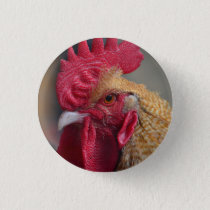Rooster Chicken Pinback Button